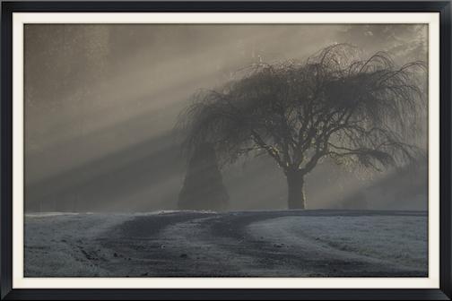 Lee - Willow+tree-3